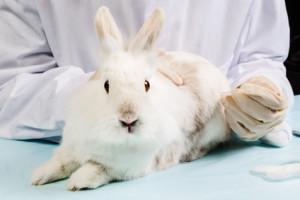 Tiermedizin im Teilzeitstudium
