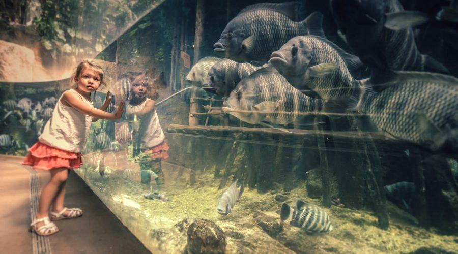 Zoopädagoge werden